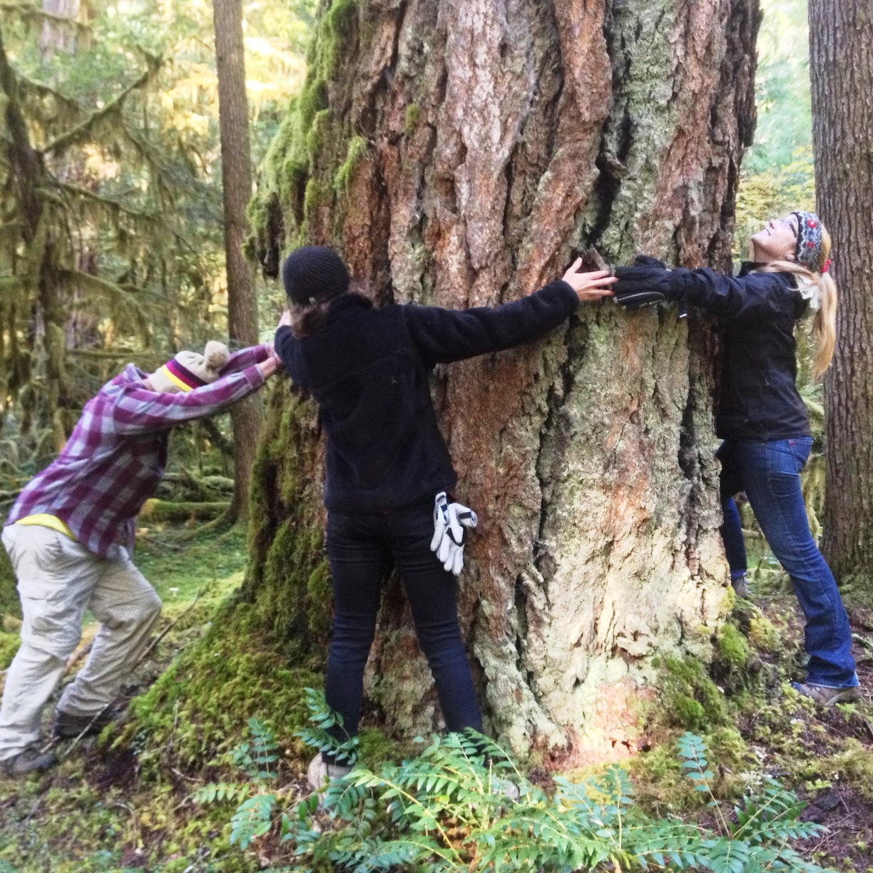 Alex Biddle, Mallory Woodman, and Meg Townsend embracing an old-growth tree